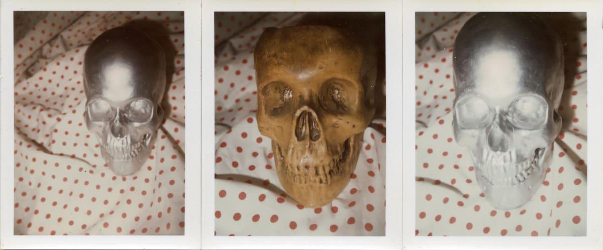 Robert Mapplethorpe Skulls (3) by Roger Mapplethorpe