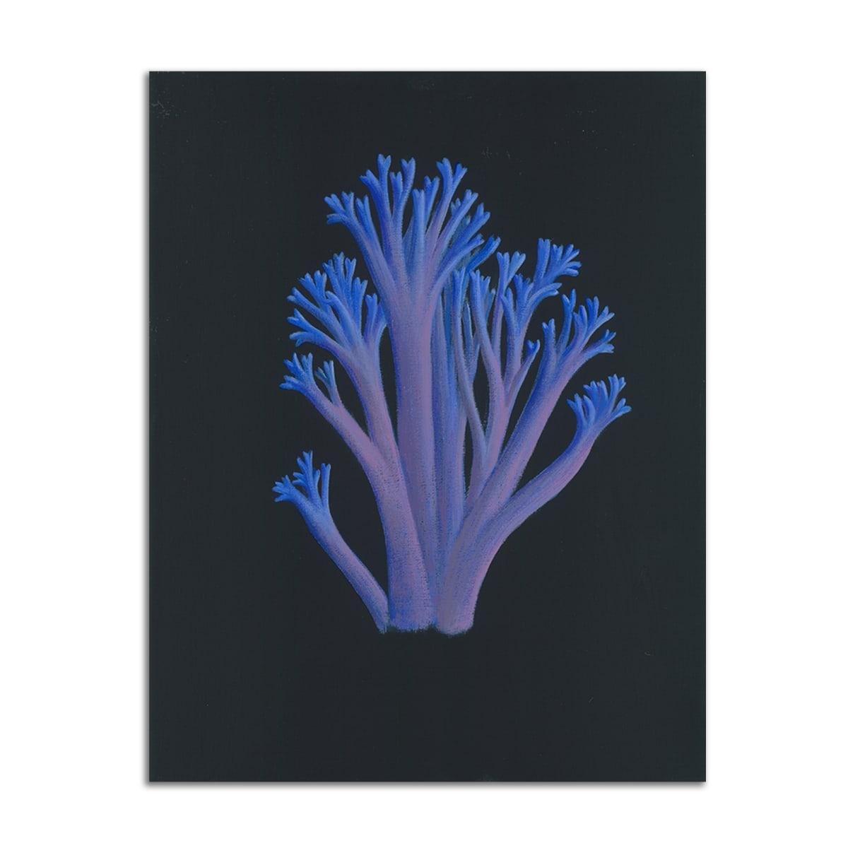 Blue Coral Mushroom by Jane Troup