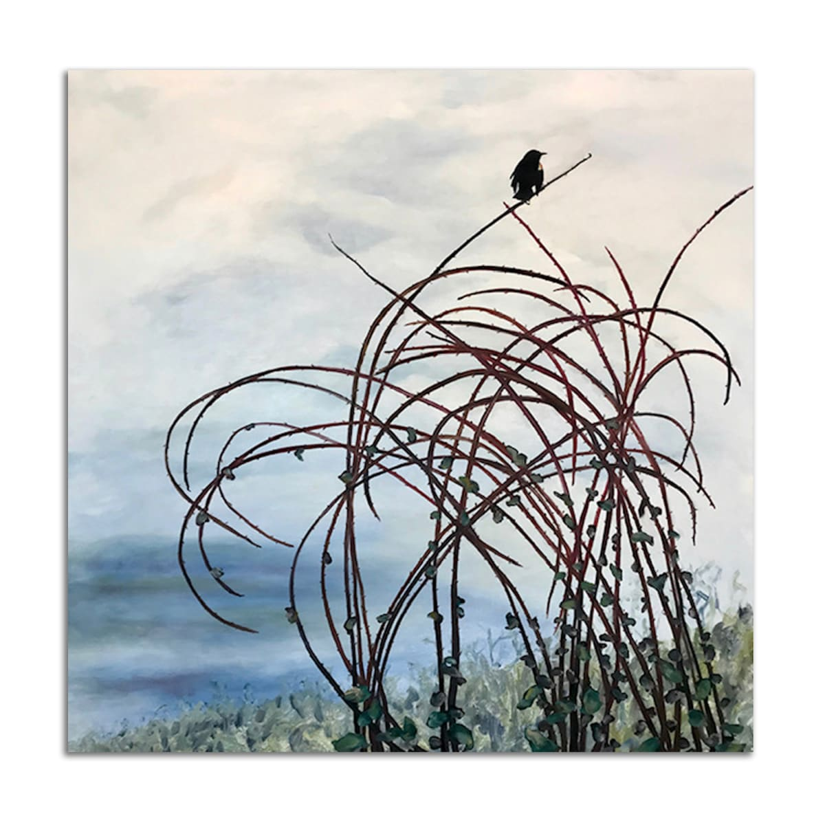 Red Winged Blackbird by Lil Olive