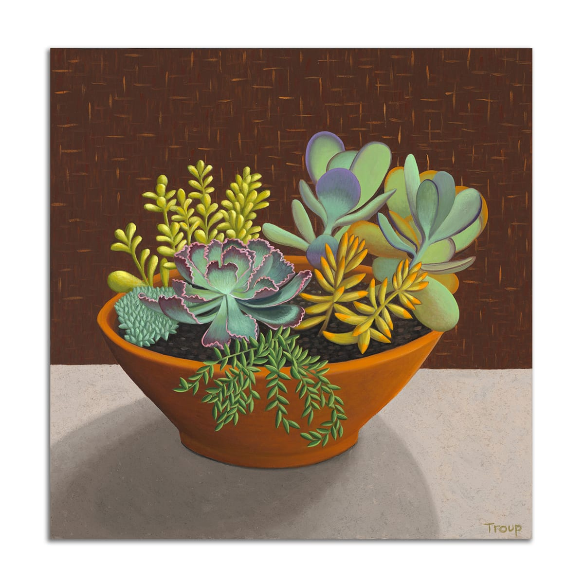 Succulents by Jane Troup