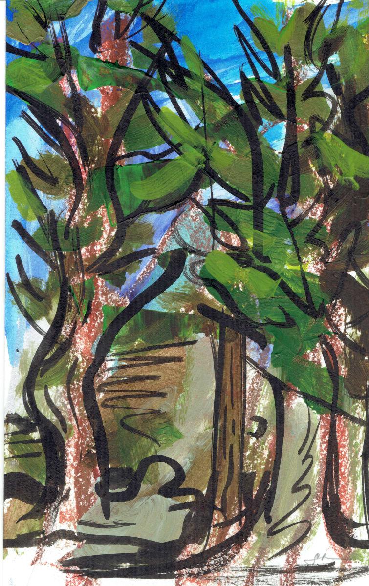 Redwoods XIV by Sonya Kleshik