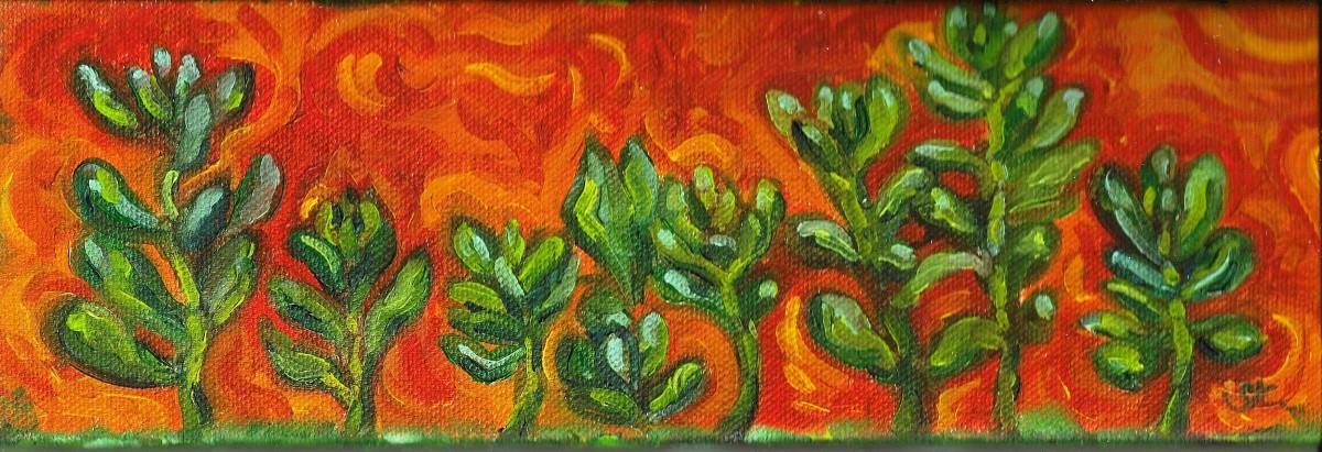Bean Succulents