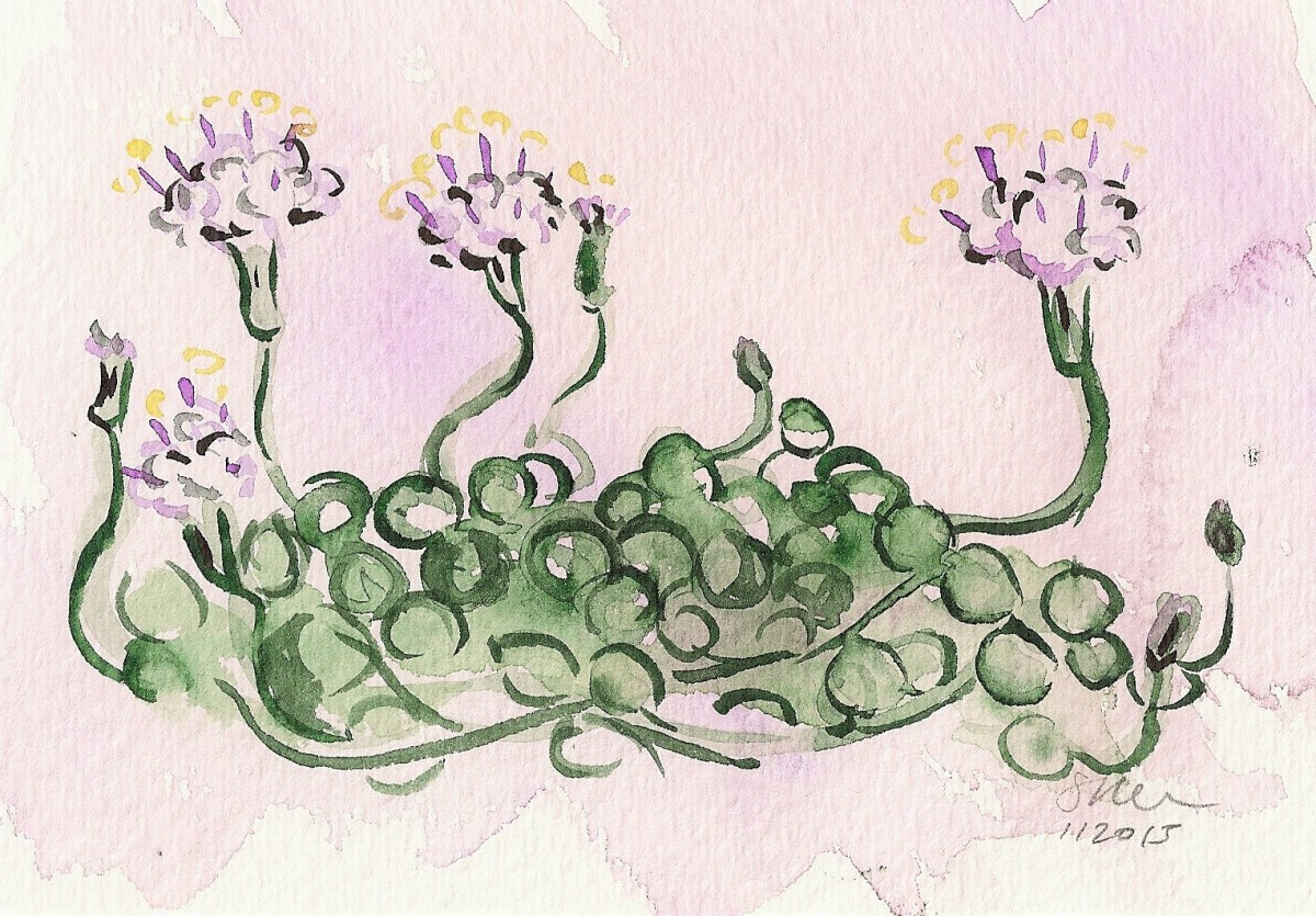 Blooming String of Pearls Succulent with Six Flowers by Sonya Kleshik