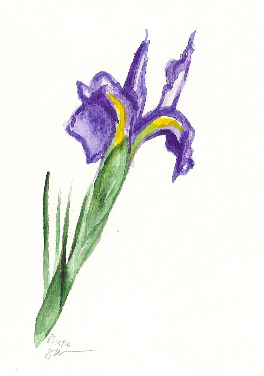 Single Iris by Sonya Kleshik
