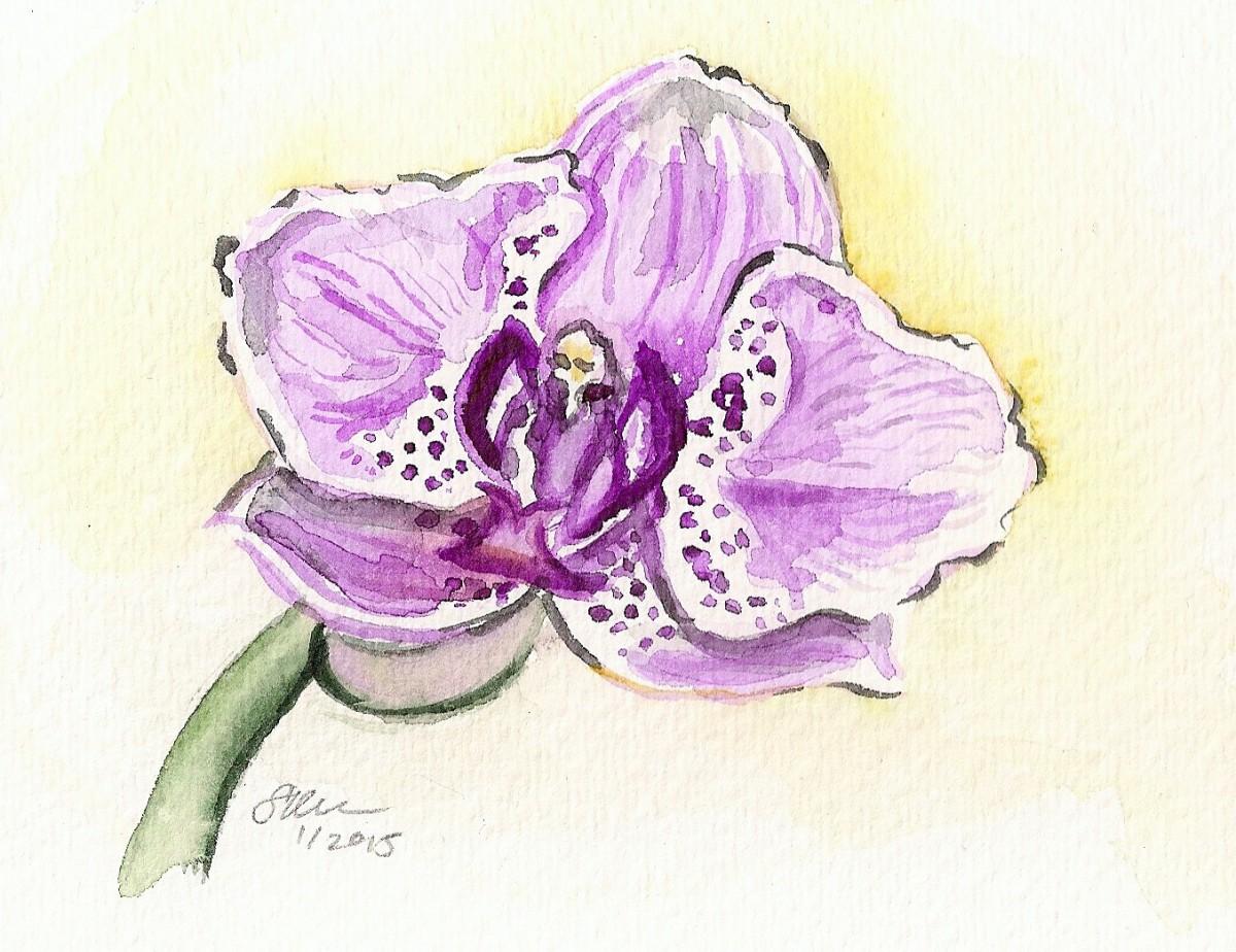 Pink Orchid by Sonya Kleshik