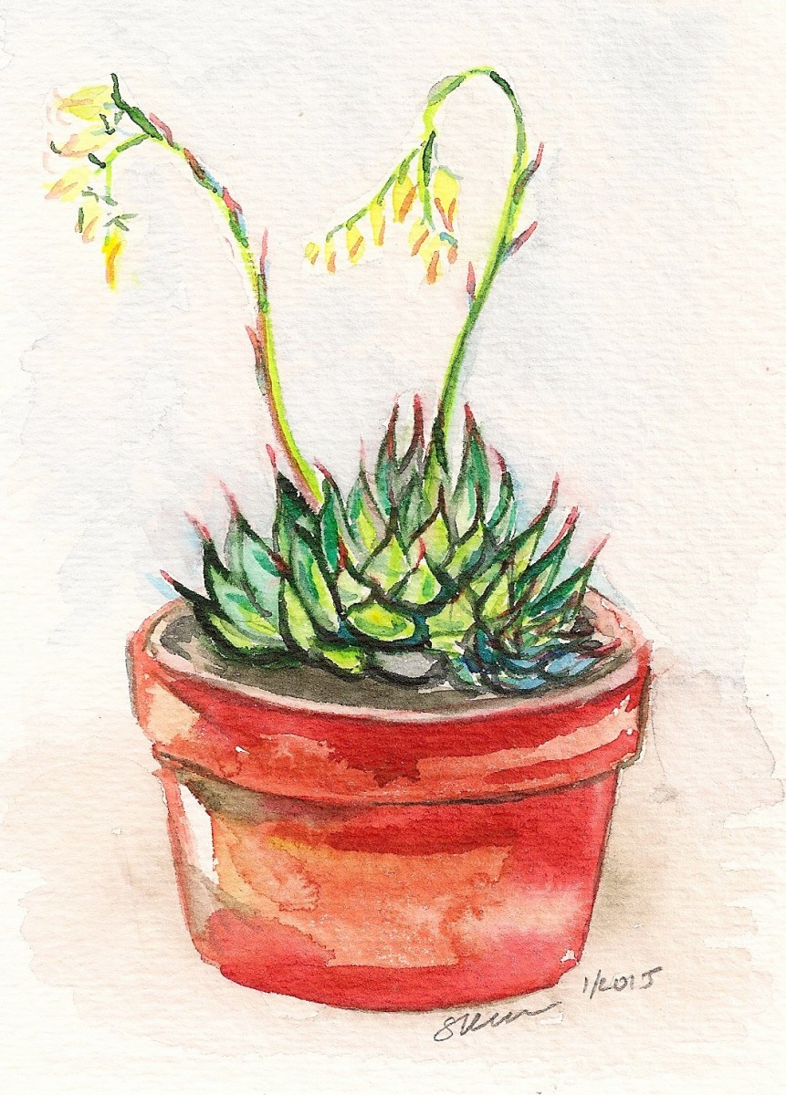 Blooming Echeveria Succulent in Red Pot by Sonya Kleshik