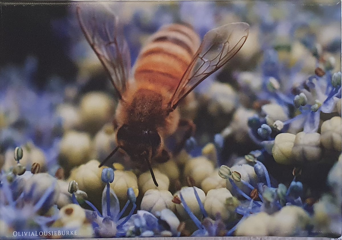 Busy Bee by Olivia Burke