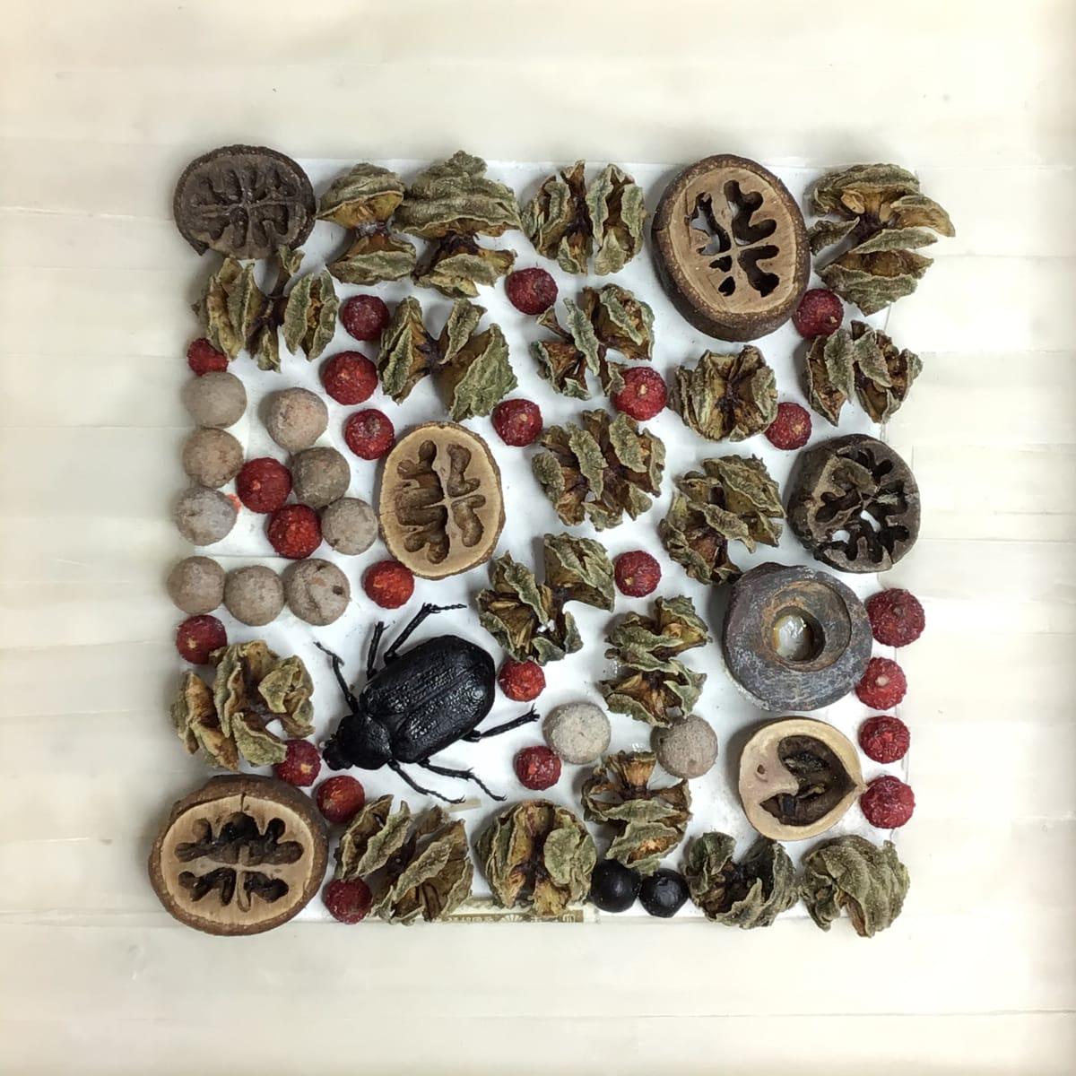 Beetle with Berries by Richard B. Aakre