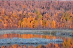 Alaskan Splendour by Marla Endicott