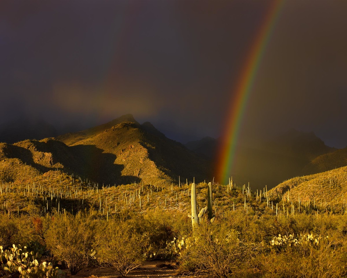 Approaching Winter Shower at Dusk, Sabino Canyon