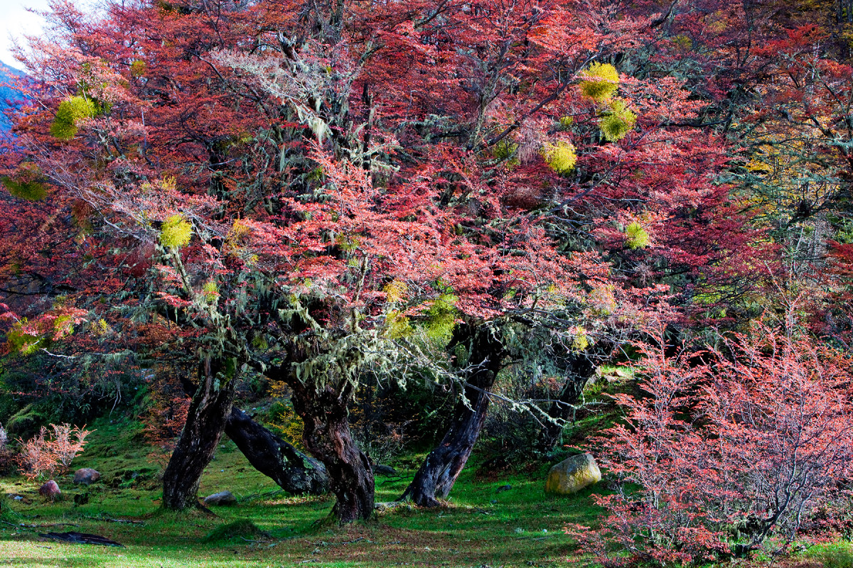 Enchanted Patagonian Forest