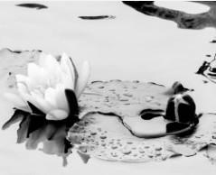 Lily Pad by Sonja  Van Buuren