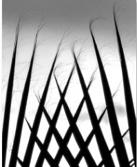 Agave Branches from Zen series