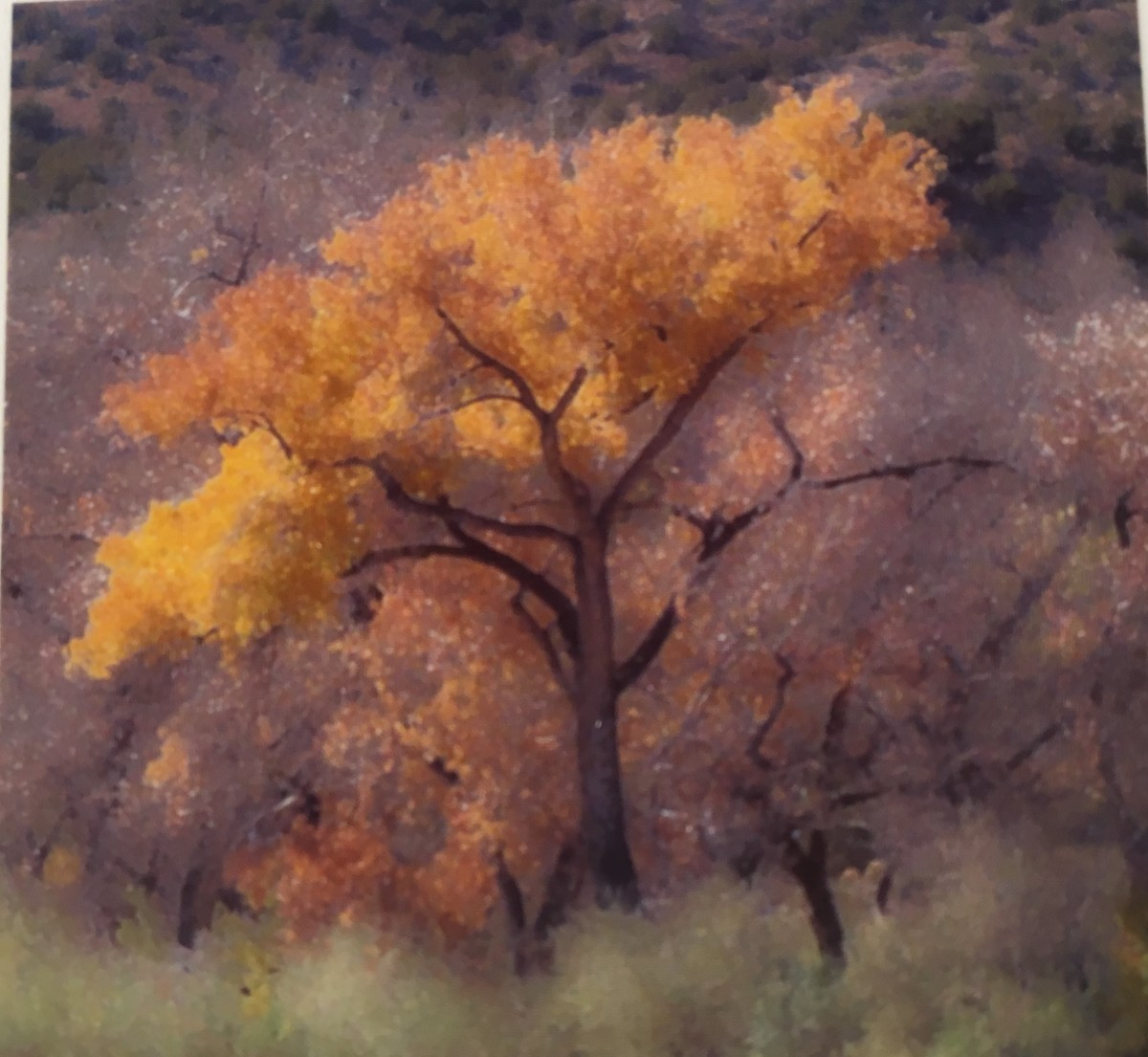 On the Road to Abiquiu, New Mexico    by Sonja  Van Buuren