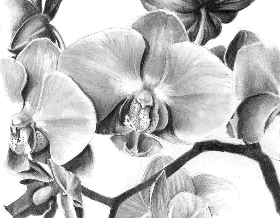 Orchid by Ally Tate