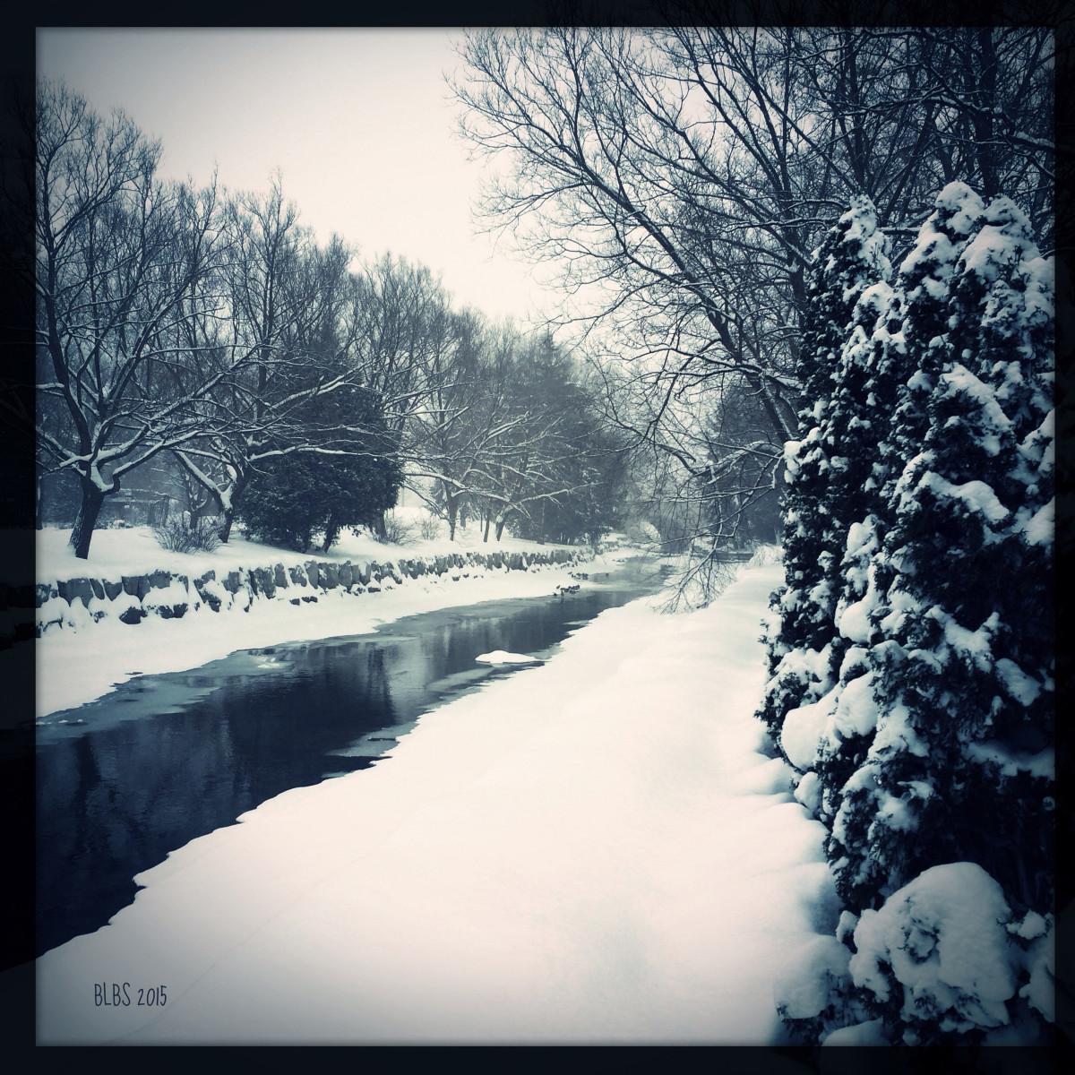 Snowy River Bank