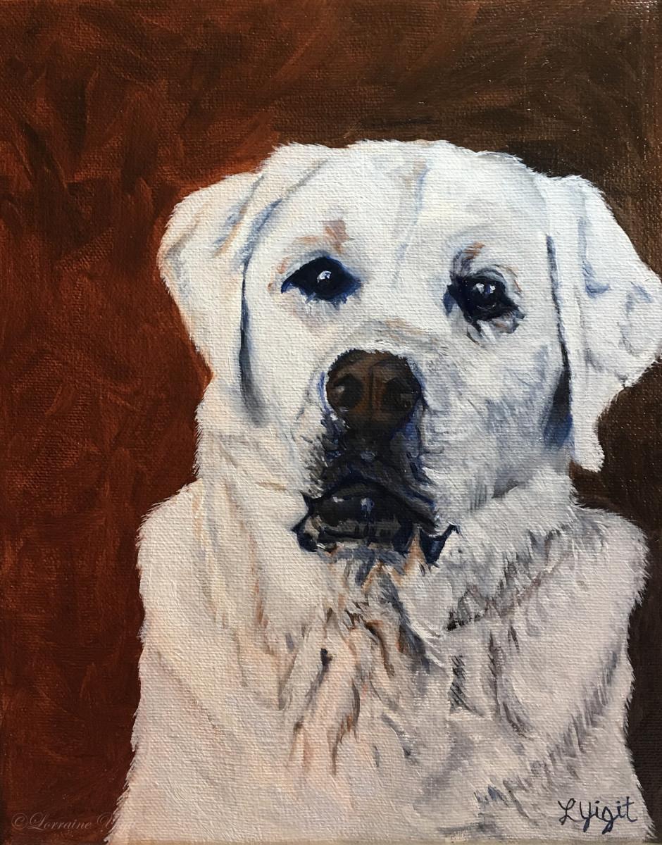 Krypto - the Wise Labrador