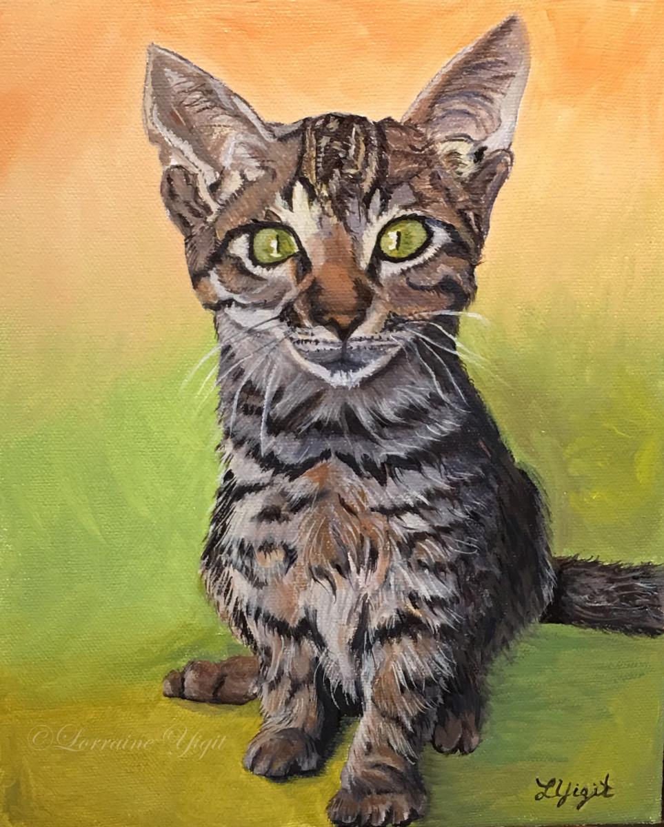 Deago- the Mexican Kitten