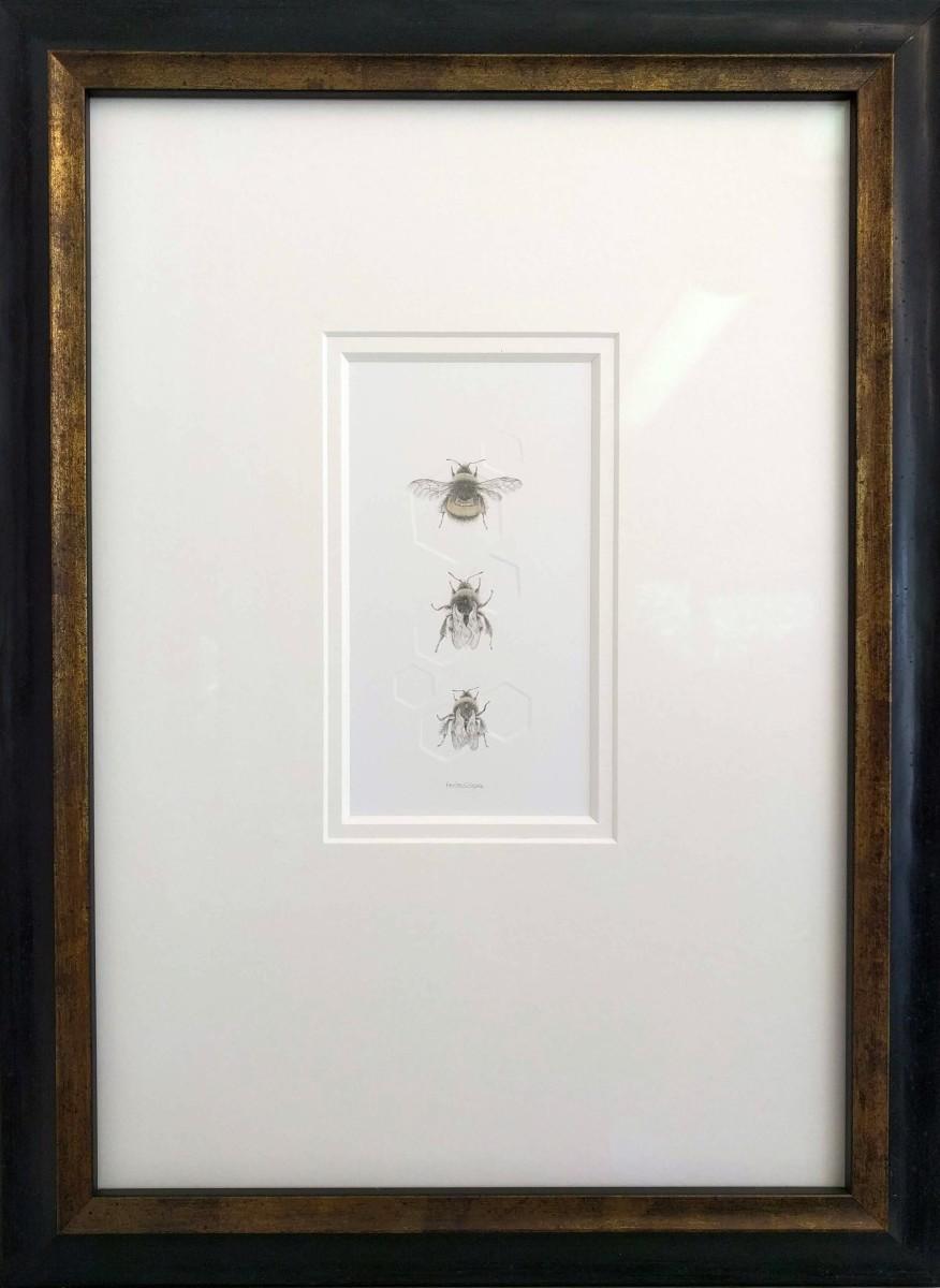 Buff tailed BumbleBee 3.10e by Louisa Crispin