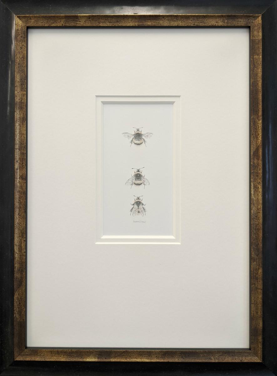 Buff tailed BumbleBee 3.26 by Louisa Crispin