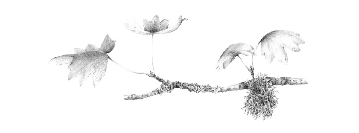 Lichen on Field Maple ii by Louisa Crispin