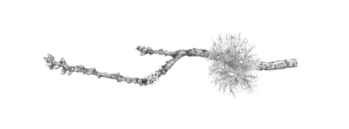Lichen on Oak iv ~ Elan Valley by Louisa Crispin