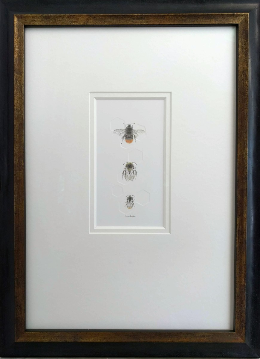 Red tailed BumbleBee 3.8e by Louisa Crispin