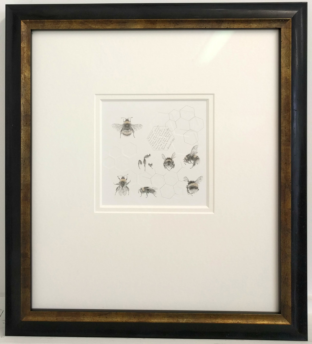 Study of a  BumbleBee 021 by Louisa Crispin