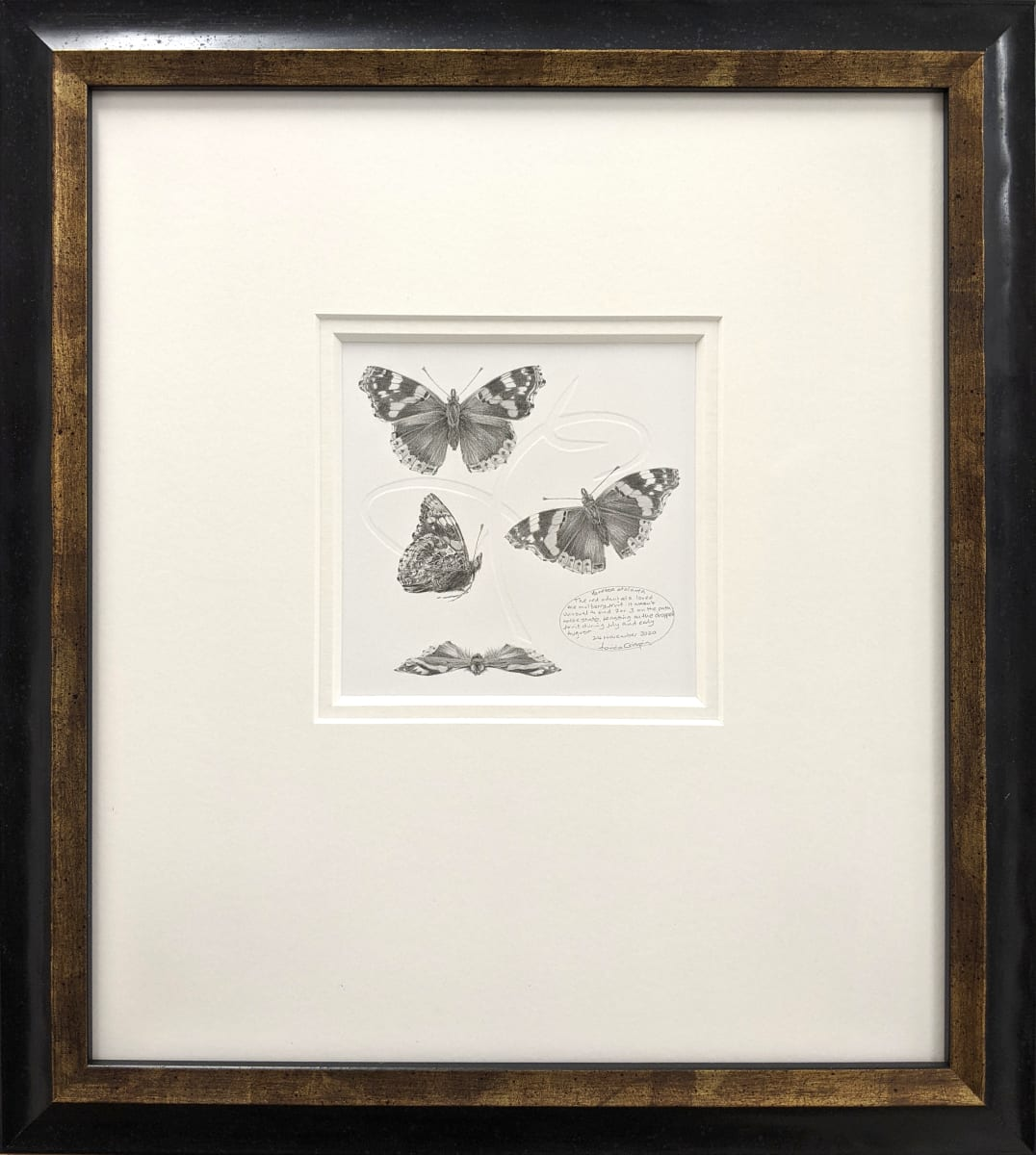 Study of a  Butterfly 004 ~ Red Admiral by Louisa Crispin