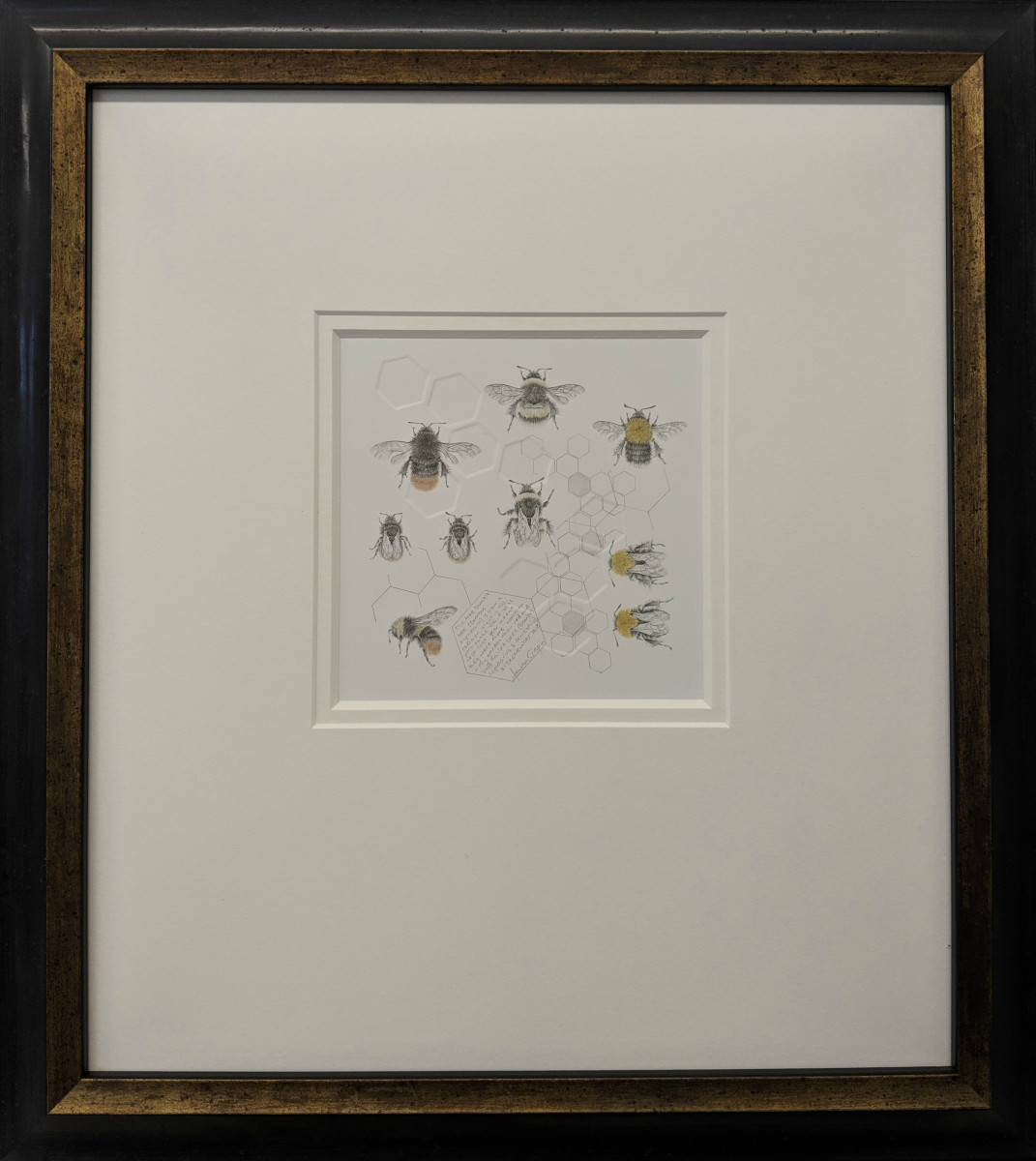 Study of a  BumbleBee 023 by Louisa Crispin