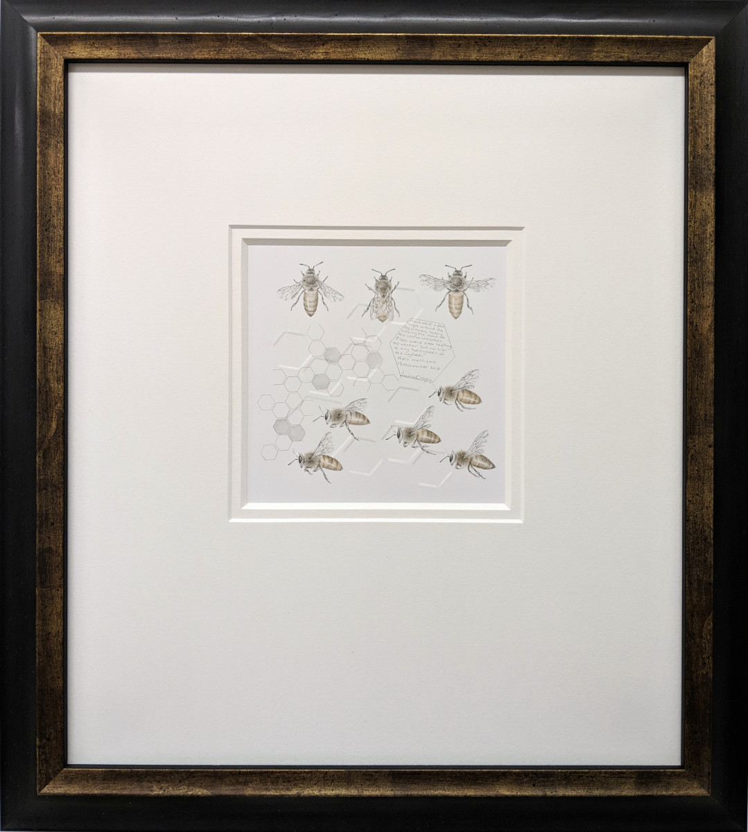 Study of a  HoneyBee 005 by Louisa Crispin