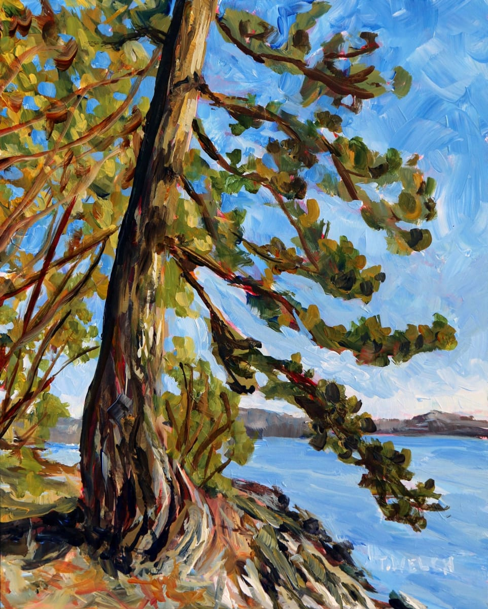 Standing Before an Old Fir Tree Study by Terrill Welch