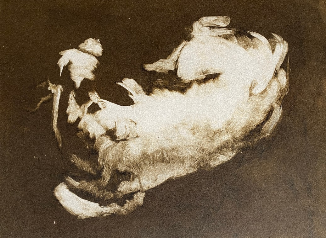 Calf monotype by Philine van der Vegte