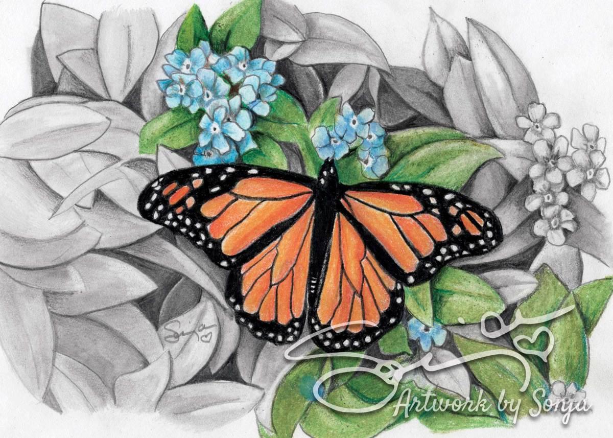 Cantu Butterfly