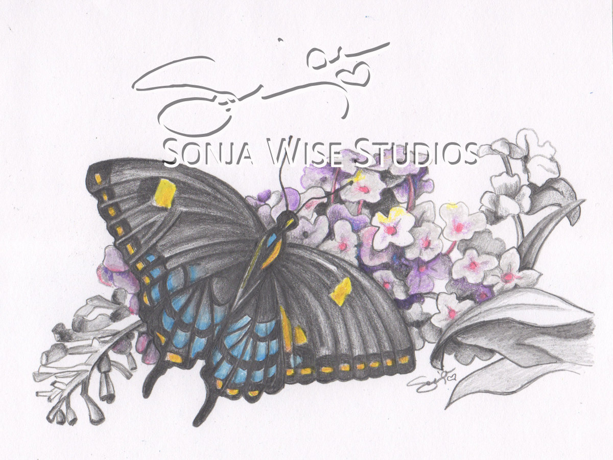 Butterfly No 4 Print