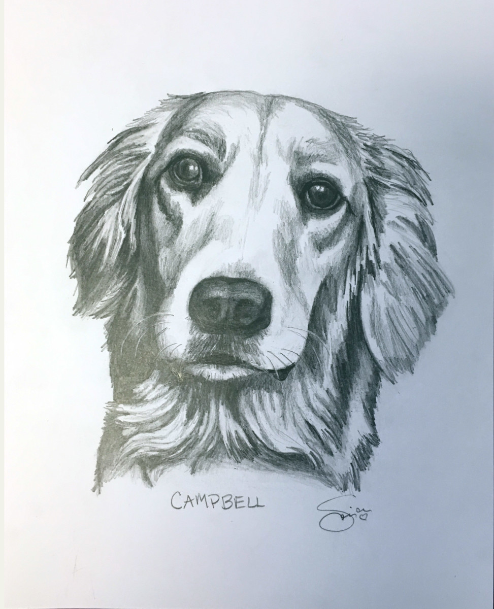 CAMPBELL by Sonja Petersen