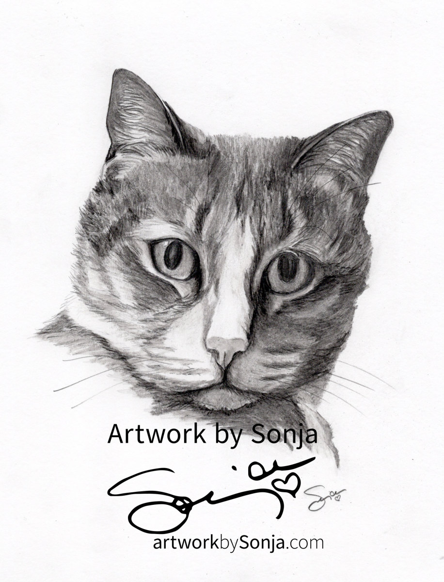 Cat Memorial Pet Portrait by Sonja Petersen
