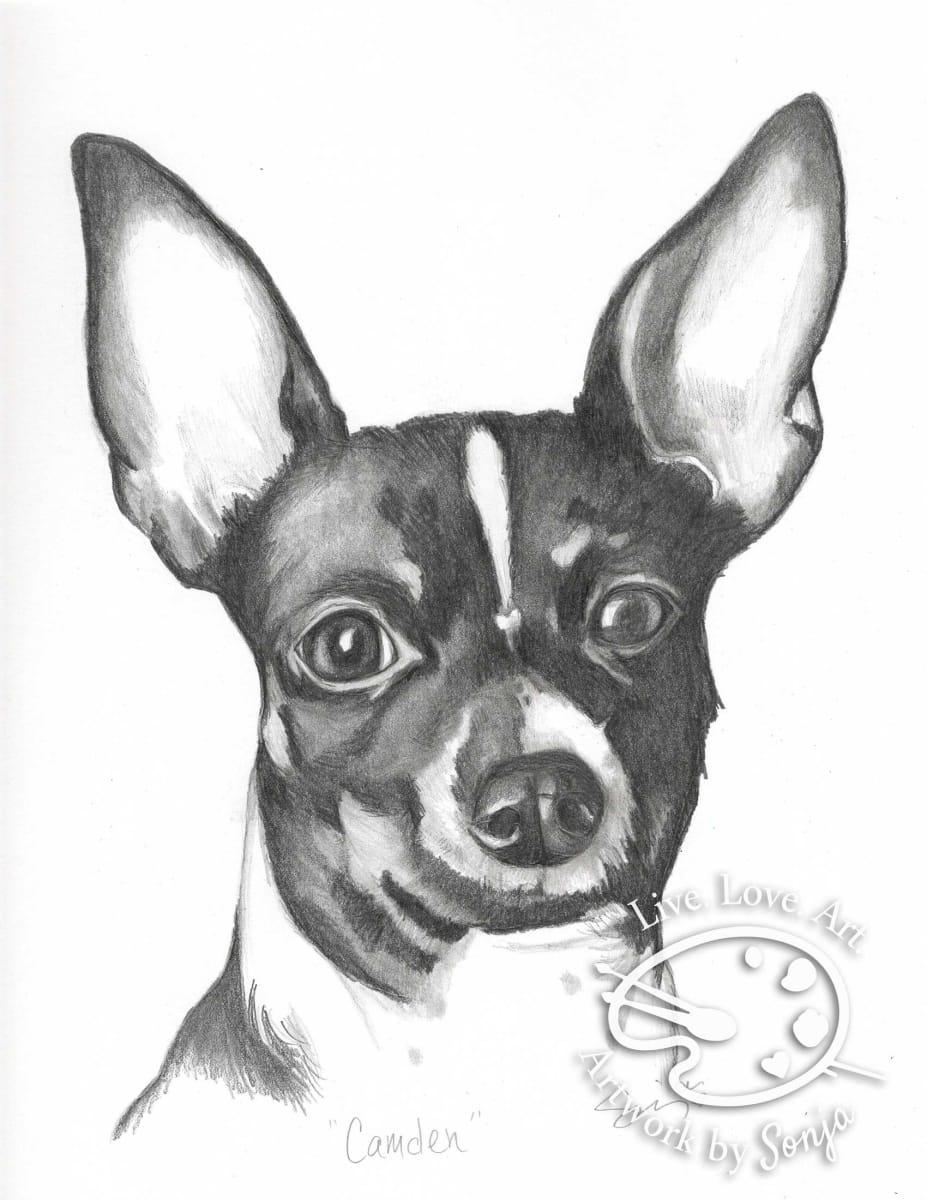 Chihuahua Pet Portrait by Sonja Petersen