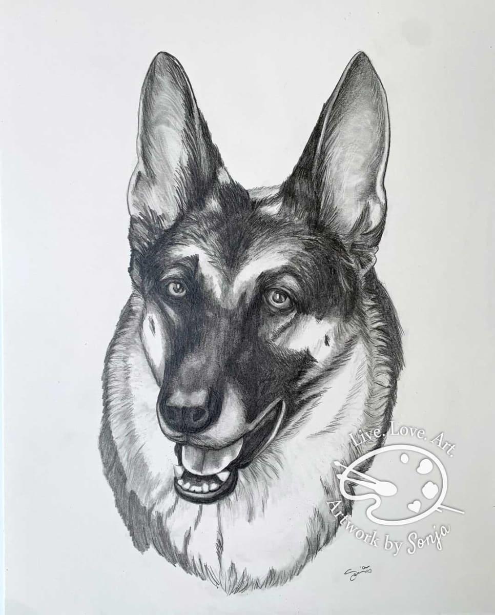 German Shepherd Pet Portrait  in pencil by Sonja Petersen