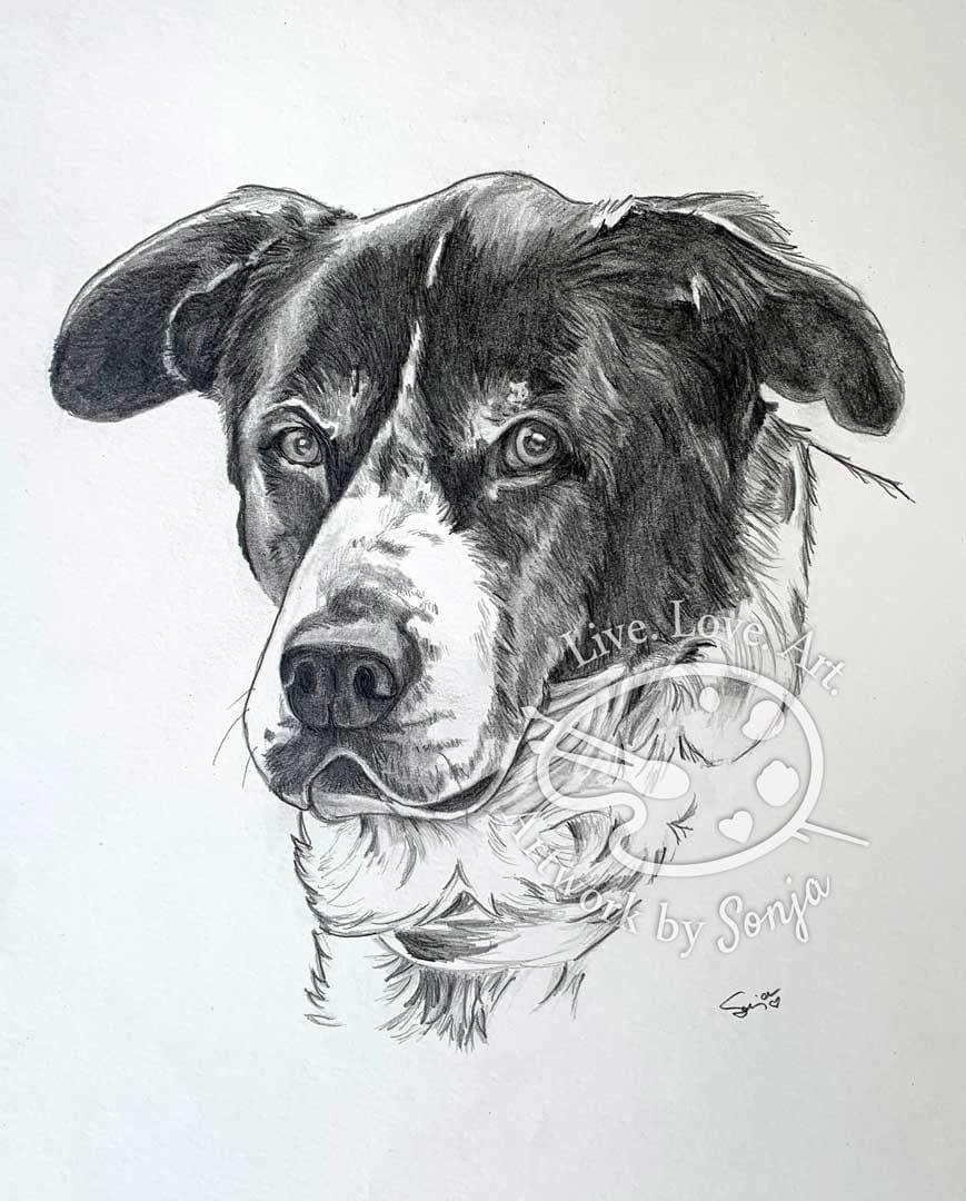 Mixed Breed Pet Portrait in Pencils by Sonja Petersen
