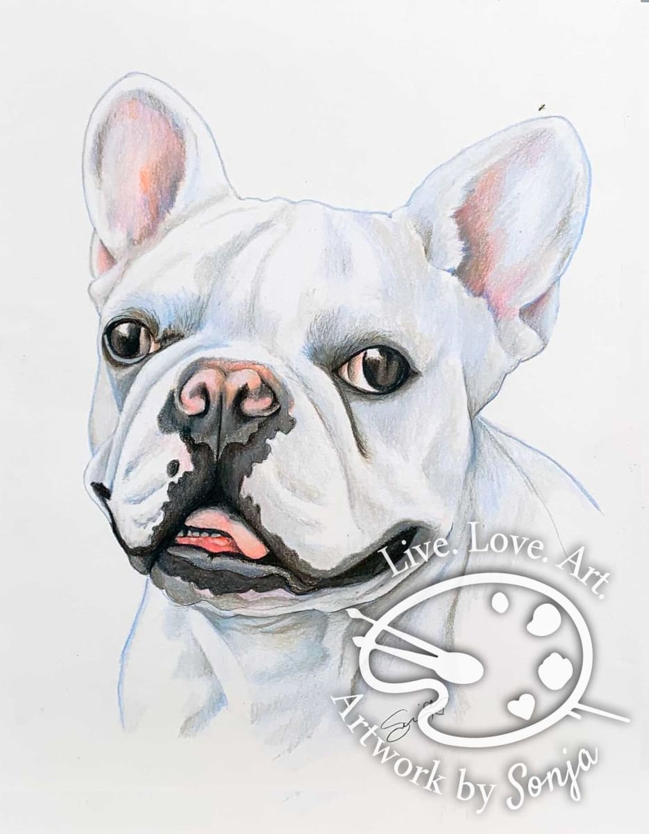 Frenchie Drawing
