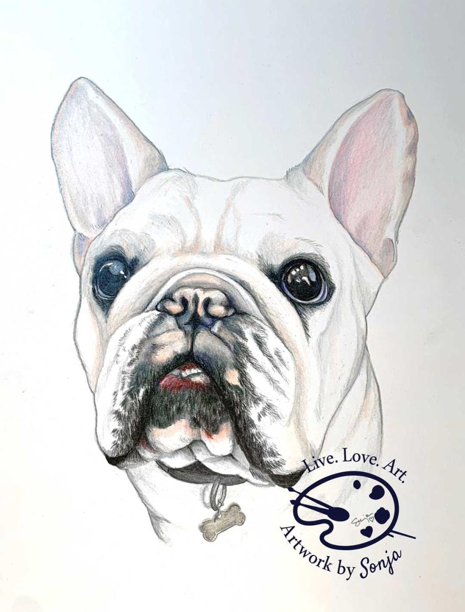 Henry the French Bulldog Portrait by Sonja Petersen