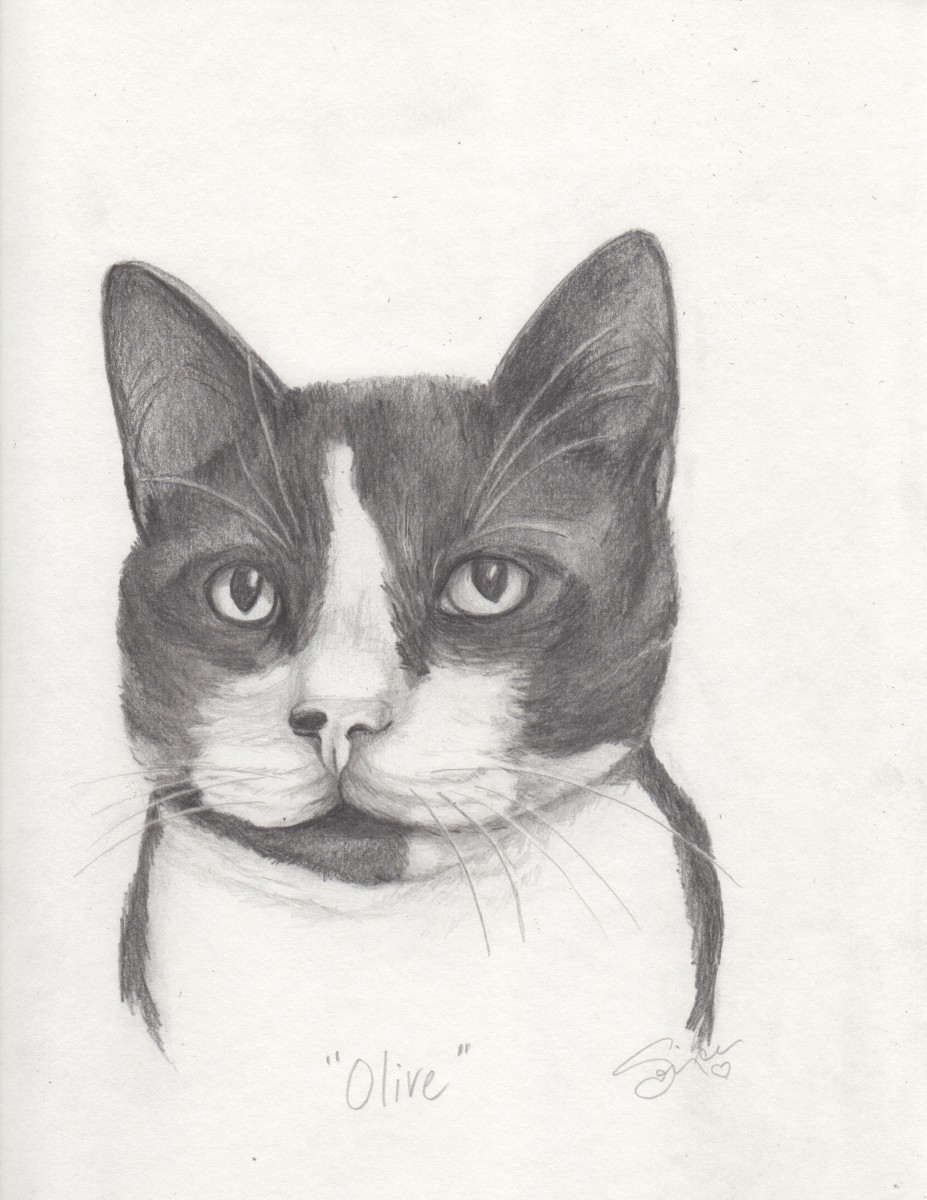Olive Cat Portrait by Sonja Petersen