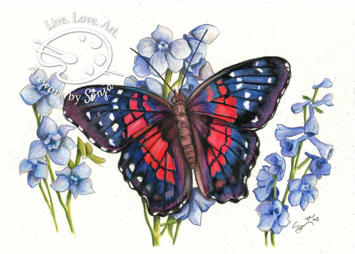 Ruby True Blue Butterfly Drawing by Sonja Petersen