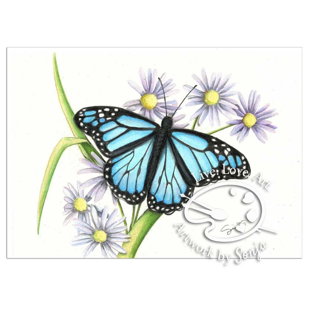 Sapphire Monarch Butterfly Drawing by Sonja Petersen