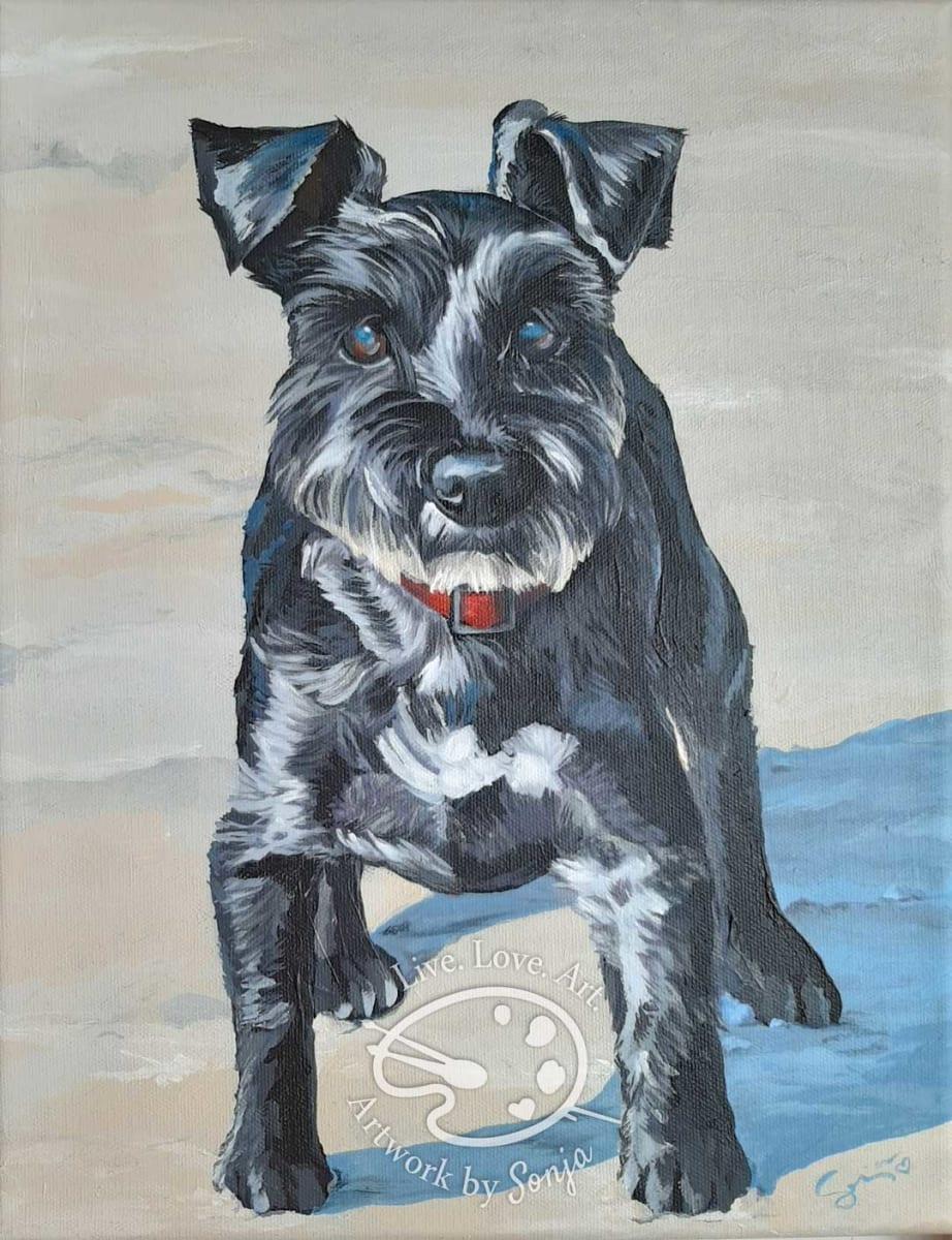 Schnauzer Pet Memorial Painting by Sonja Petersen