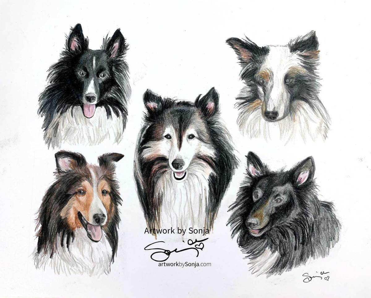 Sheltie Family Pet Portrait