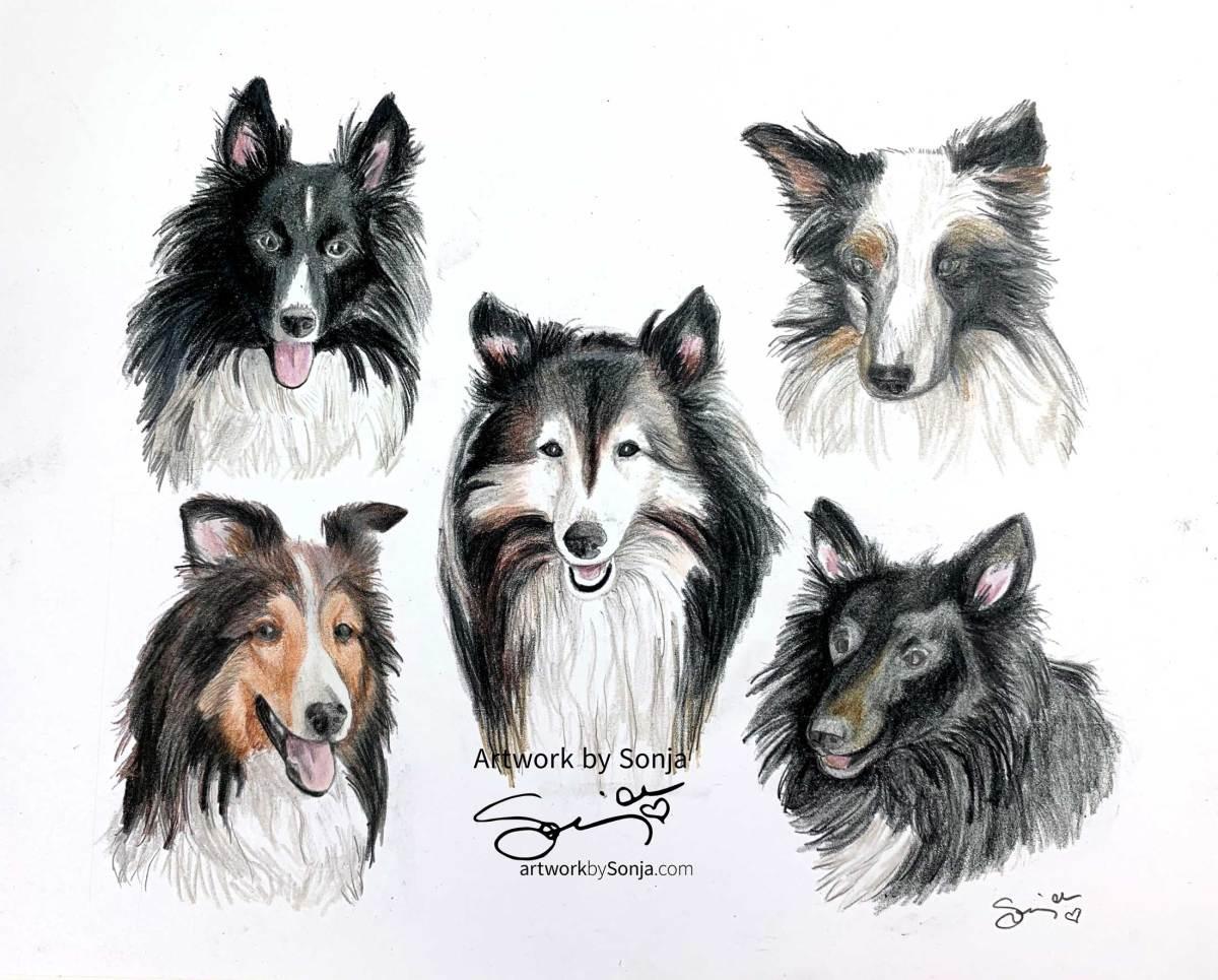 Sheltie Family Pet Portrait by Sonja Petersen