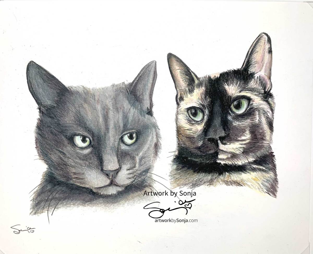 Smokey and Calico Cat Portrait by Sonja Petersen