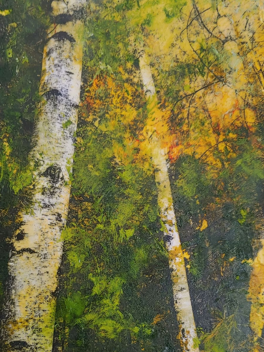 Towering Birches by Mary Mendla